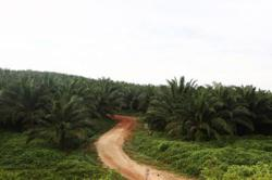 Daily oil palm activities in Sabah to continue amid SOPs - associations