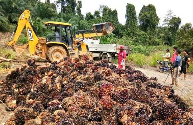 Palm oil plantation in Sabah (File pic)