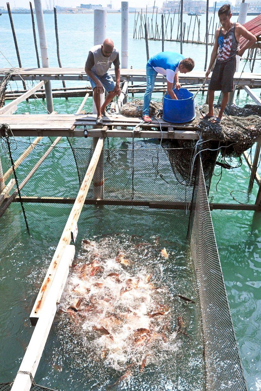 Fishermen feeding fish at a farm in Gelang Patah, Johor.