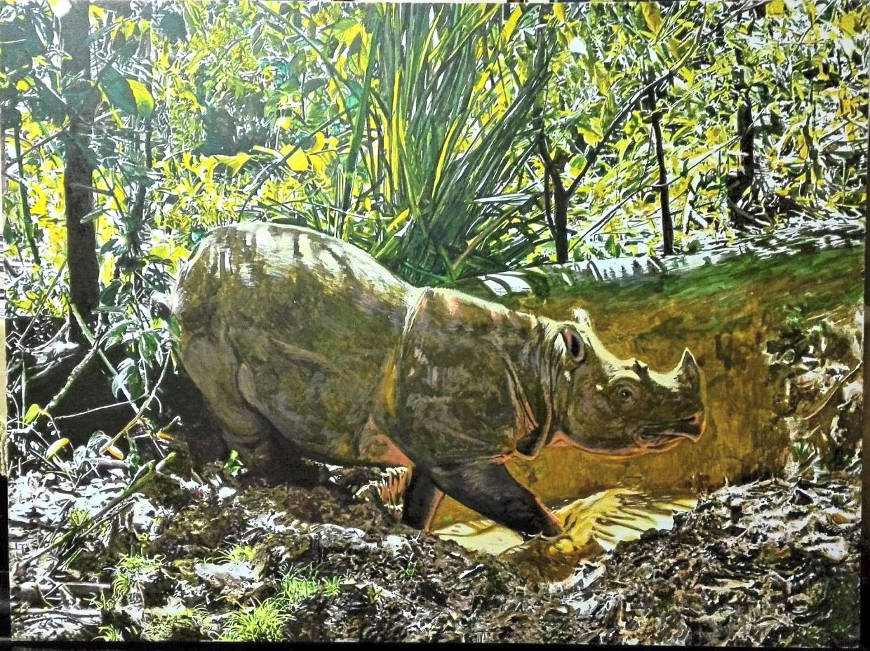 Nasir's art, such as 'Tam In Remembrance', encouraged viewers to get passionate about wildlife conservation. Photo: Handout