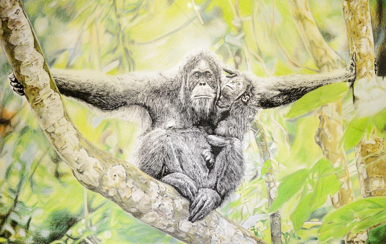 Nasir's 'Memory Of Orangutan' (ink and colour pencils, 2018). Photo: Handout