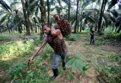 India's tax increase on crude palm oil imports could reduce shipments