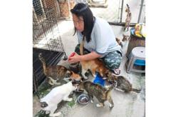 Hard times for animal shelters