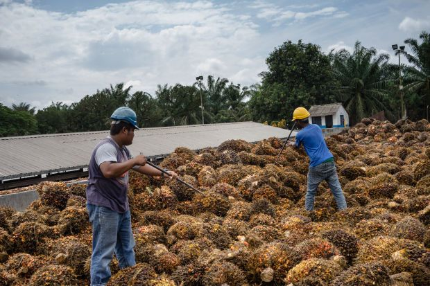 It said the company expected financial year (FY) ending April 30,2021 to 2022 fresh fruit bunch (FFB) growth of 12%-15%/10%-12% (versus the research house's estimates of  10%/ 4%).
