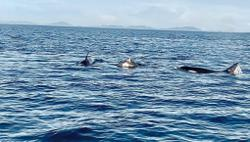 Killer whale sighting reinforces importance of Semporna waters