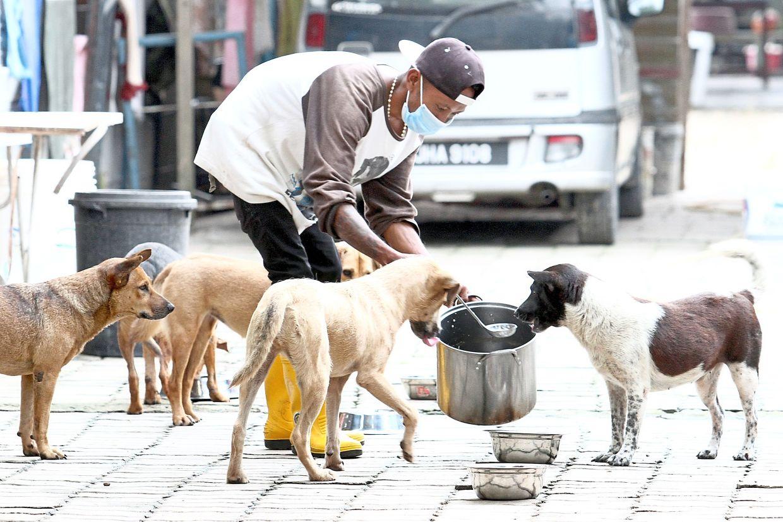 A man feeding hungry strays in Pekan Nenas.