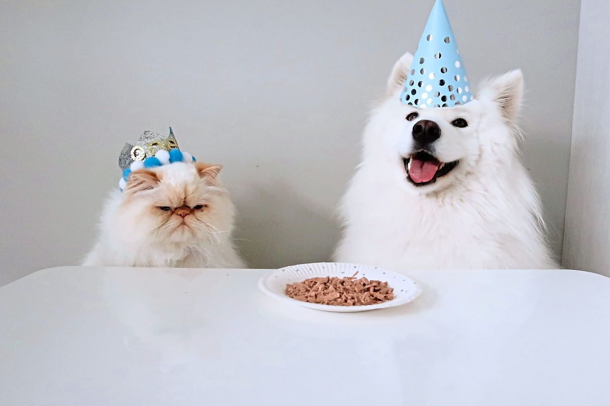 Celebrating Romeo's first birthday. Li tried to make a cake for him but it fell apart and just looks like a plate of food. Romeo looks unimpressed while Casper just smiles for the camera.