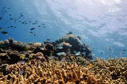 Noise pollution is harming sea life, needs to be prioritised, scientists say