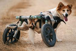 Shelter for disabled stray dogs threatened