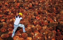Sabah wants to be global leader in sustainable palm oil production