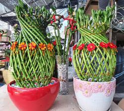 Top 5 lucky plants for Chinese New Year, and why they are considered auspicious