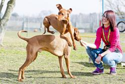 Choosing the right dog school for your pet