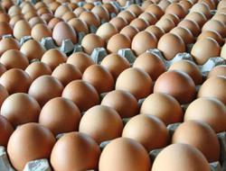 Teo Seng Capital made a loss in Q4 as Covid-19 curbs egg demand
