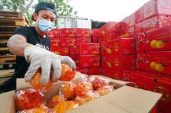 Demand for mandarin oranges declines