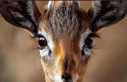 Firefighters fawn over pet deer to beat work stress