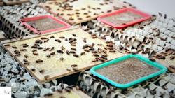 Thailand's edible insects make leap into global market