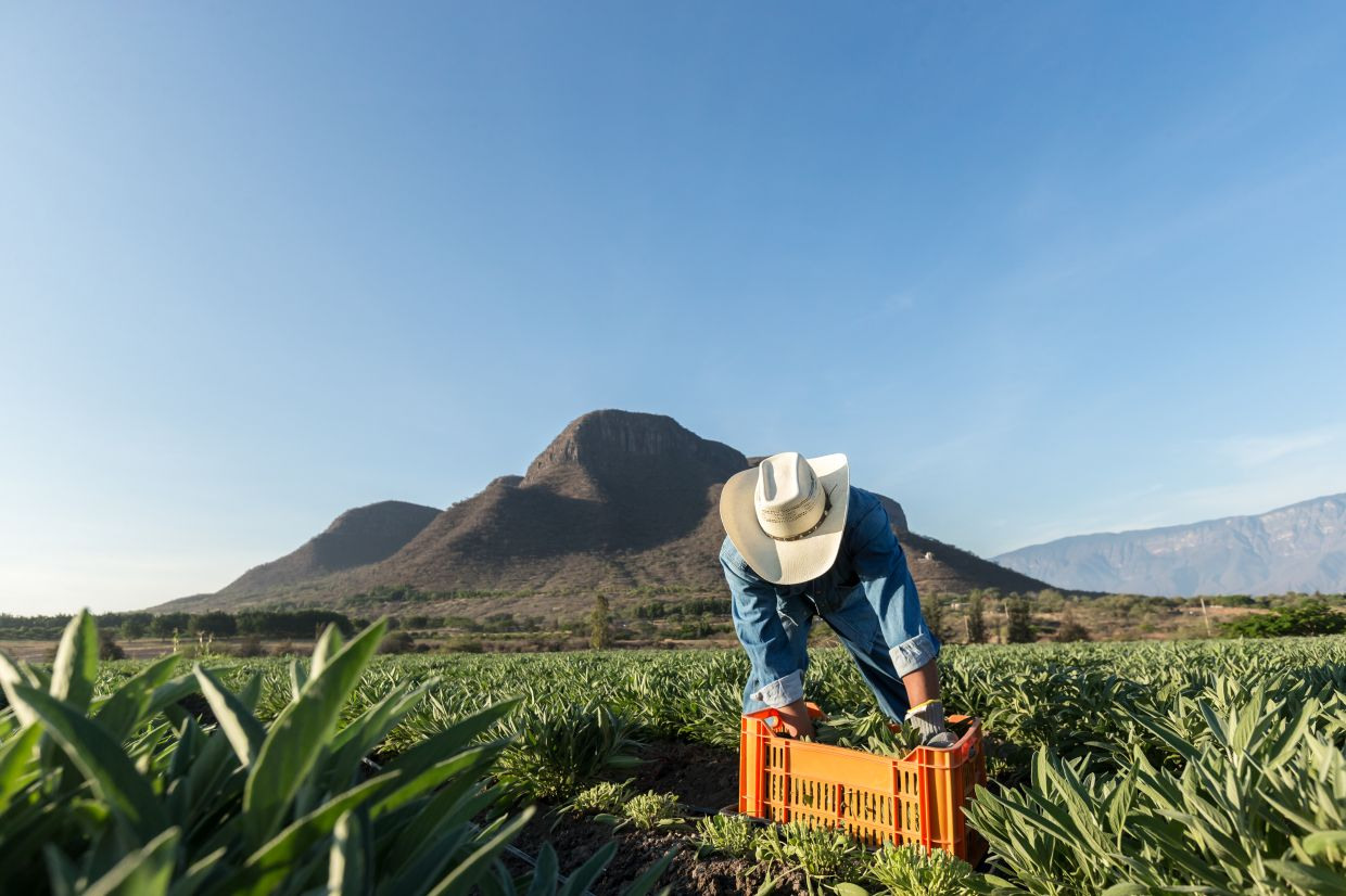 Nutrilite grows, harvests and processes plants on its own certified organic farms.