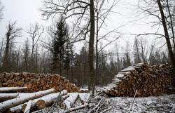 EU warns Poland to respect top court's ruling on ancient forest
