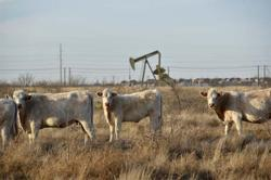 Oil price falls after surging past $65 on Texas freeze