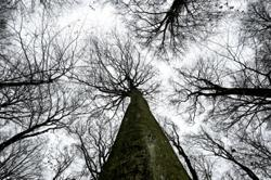 Are your trees are strong enough to withstand storms? Here's how to find out