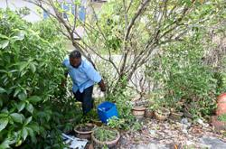 Councillors team up with residents to curb dengue