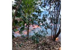 Hillside forest in Pulau Aman catches fire