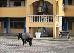 Tapir wanders into school in Kuantan as students sit for SPM paper