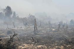 Covid-19 aside - now into the dry season, Indonesia gears up for forest and bush fires control