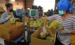 Taiwan hype over mainland 'pineapple ban' an attempt to cover a guilty conscience: Global Times editorial