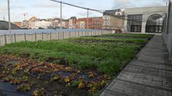 Europe's largest urban farm in Brussels protects the planet one step at a time
