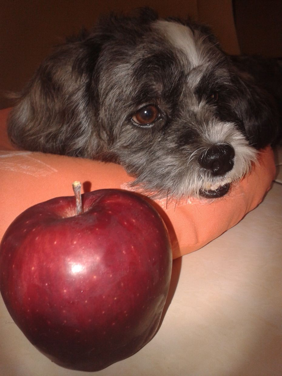 Odie is the apple of his family's eye.