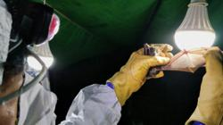 Coronavirus: unlikely clues to Covid-19 virus family found in Cambodia lab freezer, Thai drain pipe