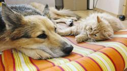 Helping a cat and dog live under one roof - with no fighting