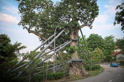 Minister: Tree checks done regularly