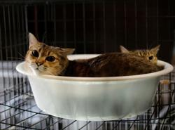 The man who saves forgotten cats in Fukushima's nuclear zone