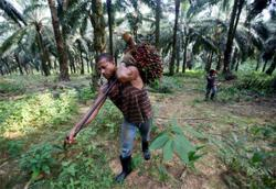 Palm oil cess collection of RM30mil to support Marcop
