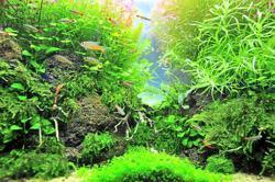 7 aquarium plants for beginners