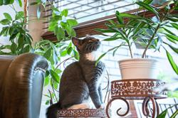 Keep your cat away from plants