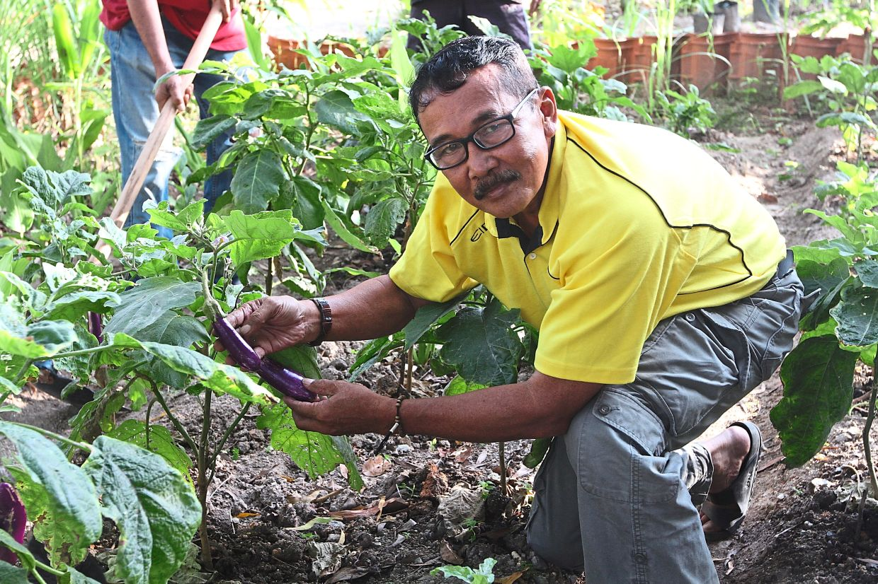 Azmi showing some of the vegetables that are grown in the Bukit Indah Community Garden, which is popular with residents and visitors.