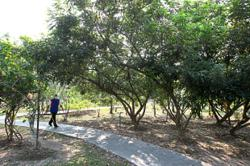 Linear park 'will be a boon to residents'