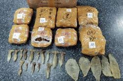 Second man held in Sibu over illegal export of fish maw