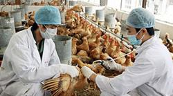 Vietnam now warned to stay vigilant over influenza A (H5N8)