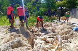 Giant clam shells worth US$3.3 million seized in Philippine raid