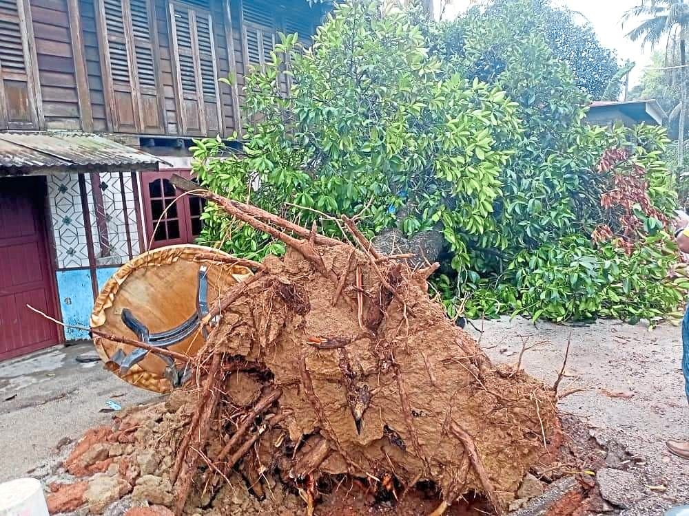 A tree which fell on a house in Pinang Tunggal.