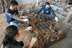 Dog slaughterhouse shuts amid pressure
