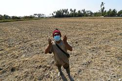Drought forcing northern farmers to alternative crops