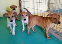 Puppies up for adoption near Gasing Veterinary Hospital