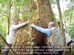 Laos: Rare Chinese swamp cypress found in Nakai-Nam Theun National Park; sparking global attention