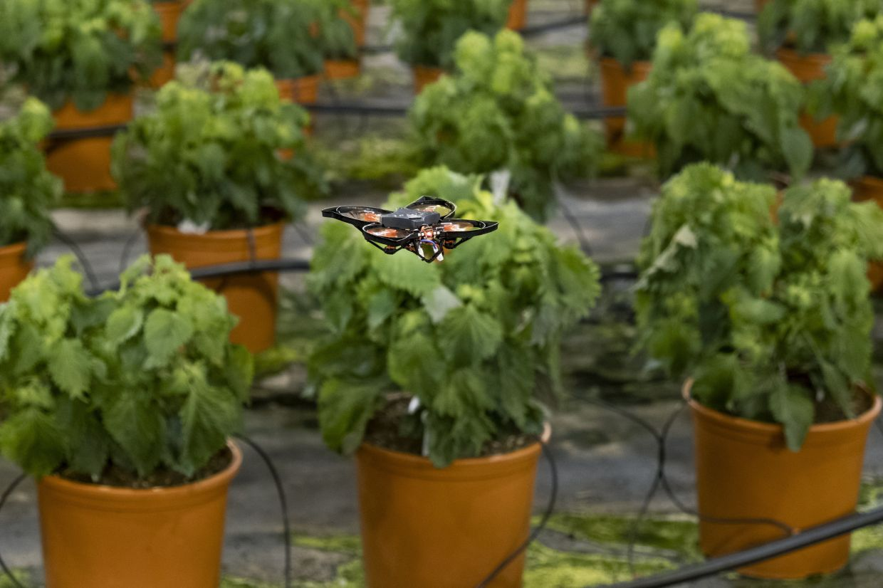 Drones vs hungry moths: Dutch use hi-tech to protect crops