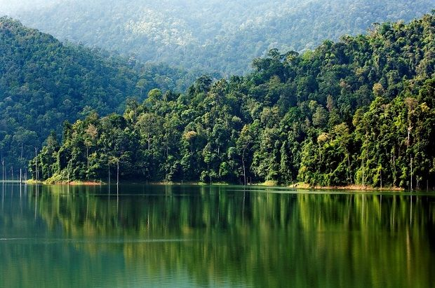 Today, 55.3% of Malaysia's total land area is covered with forests.